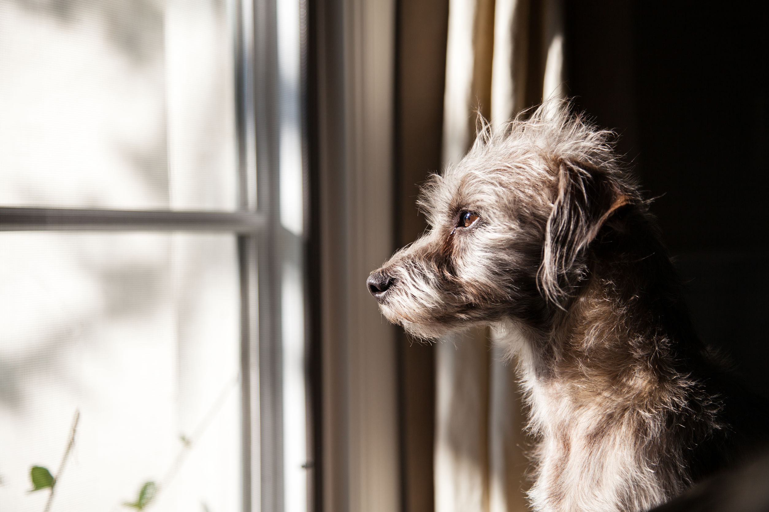 Practical Ways to Manage Dog Separation Anxiety