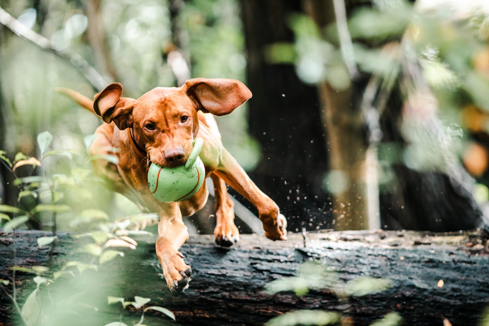 10 Ways to Keep Your Dog Safe during Summer