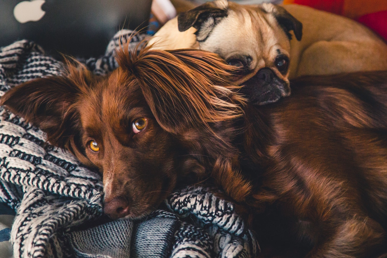 Why Socialization is Key to Your Dog's Health