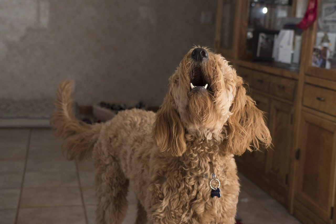 Tips To Reduce Noise In Dog Boarding And Daycare Centers