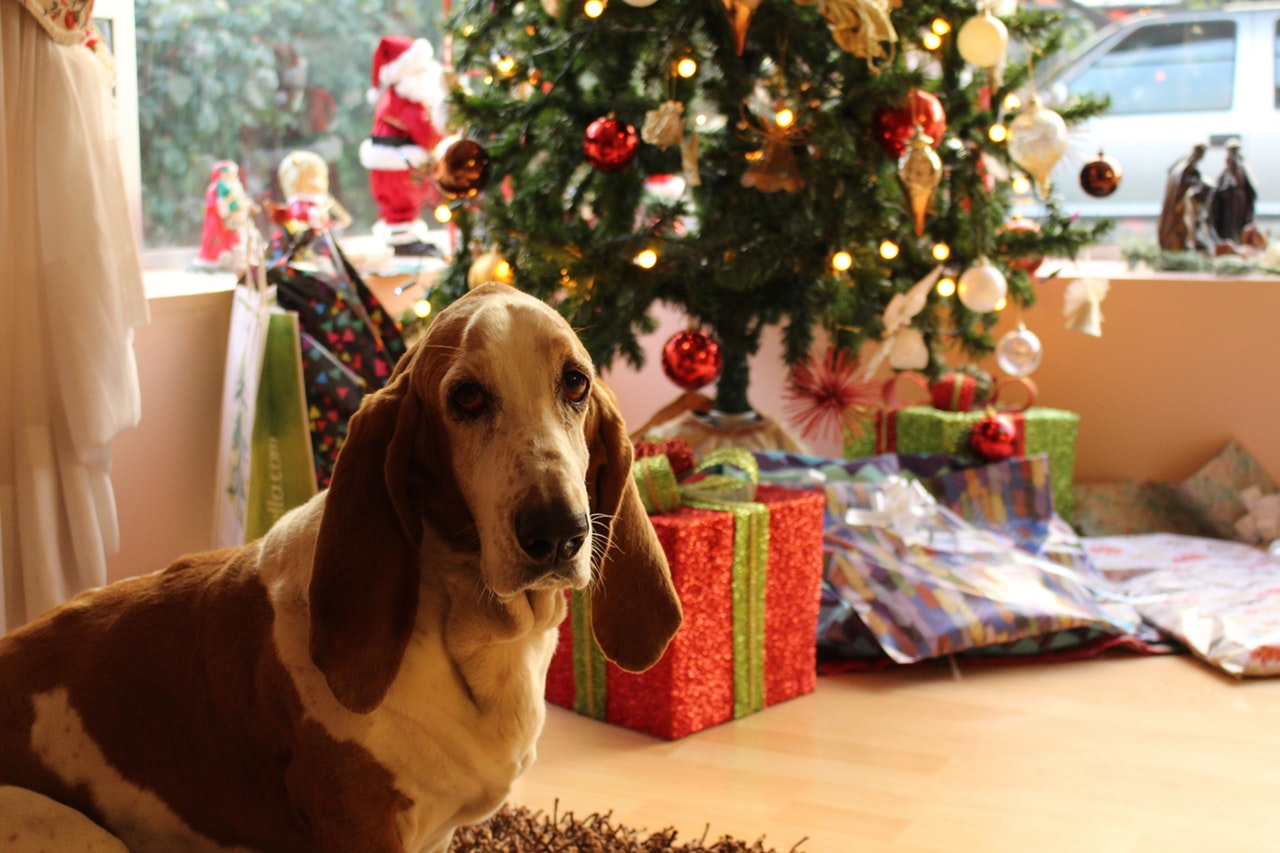 Best Christmas Gifts for Your Pet in Boarding