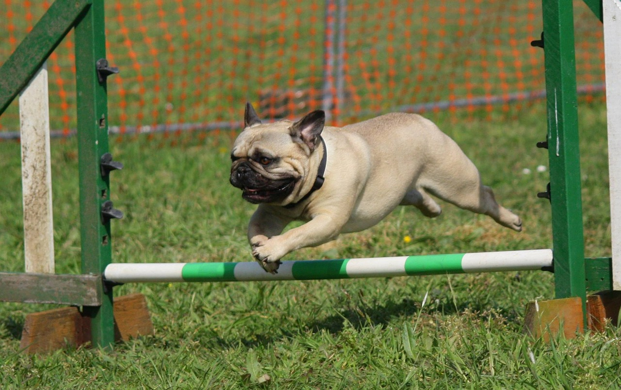 Integrate Dog Training Into Dog Play and Exercise!