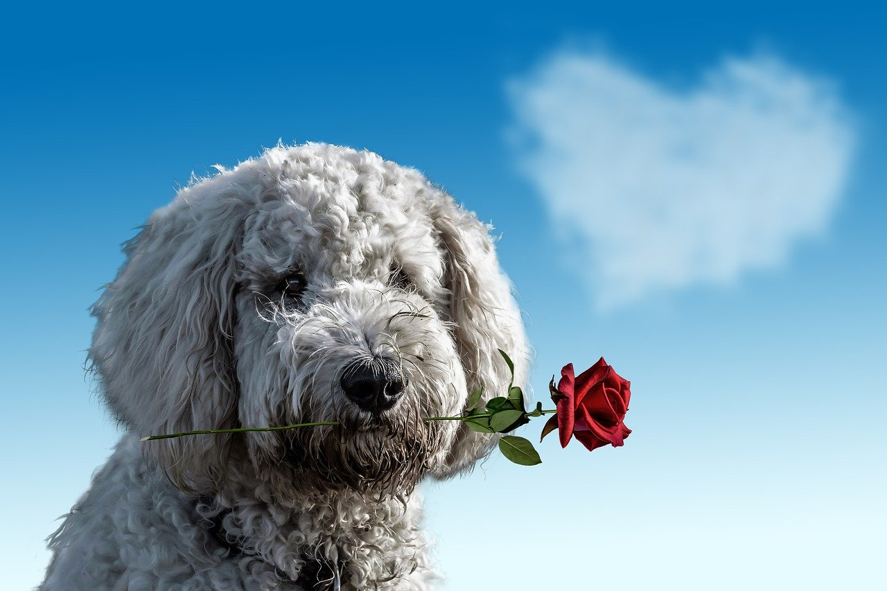 Let Your Dog Celebrate Valentine's with Us