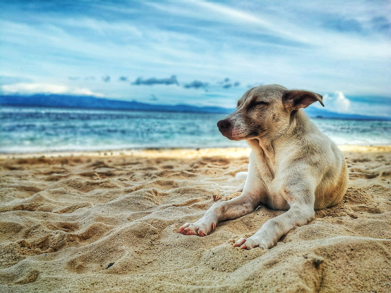 Safety Tips for Dogs in Beaches