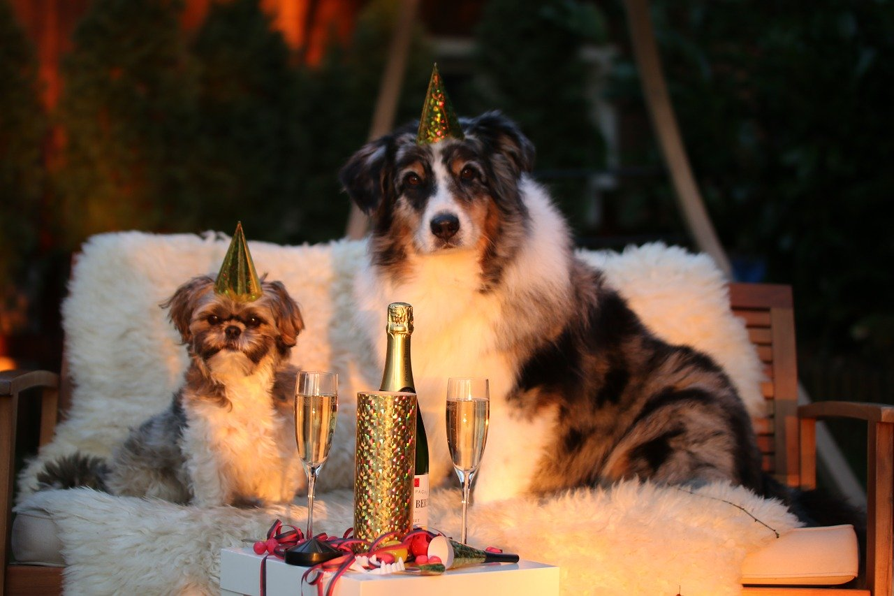 A Doggie's New Year Resolutions for 2019