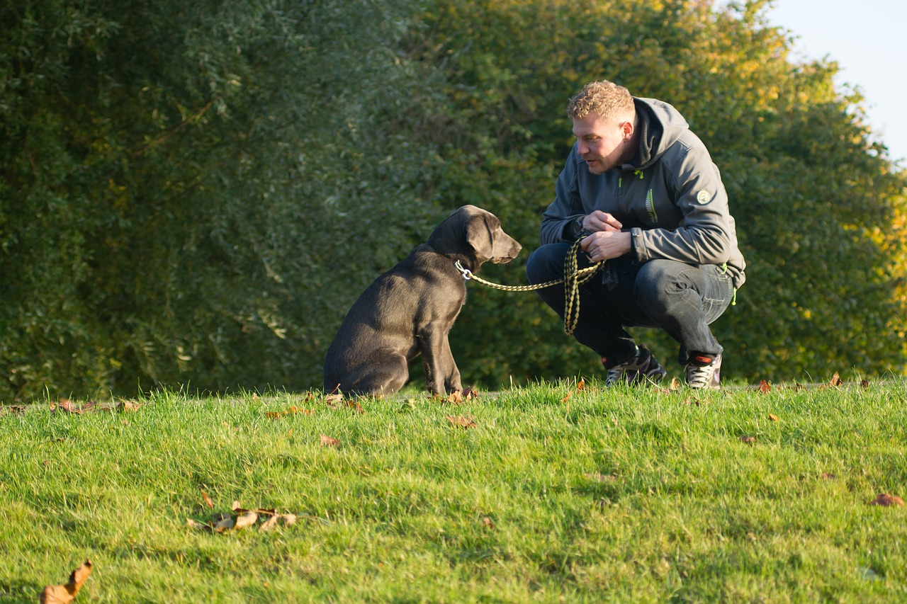 How Busy Dog Owners Can Still Care For Their Dogs