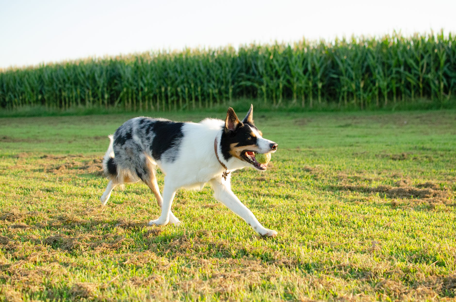6 Ways to Help Your Dog Lose Weight