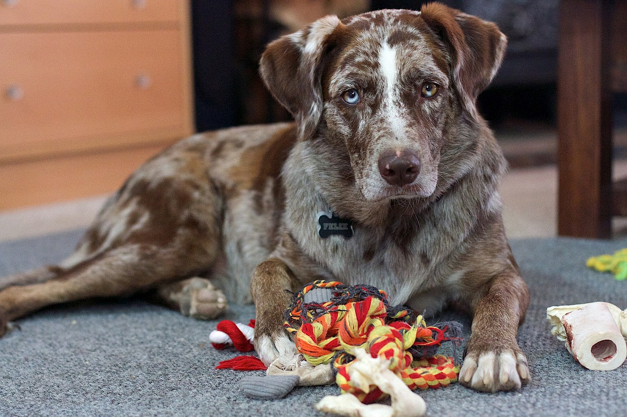 How Much Do You Know About Dog Behavior?
