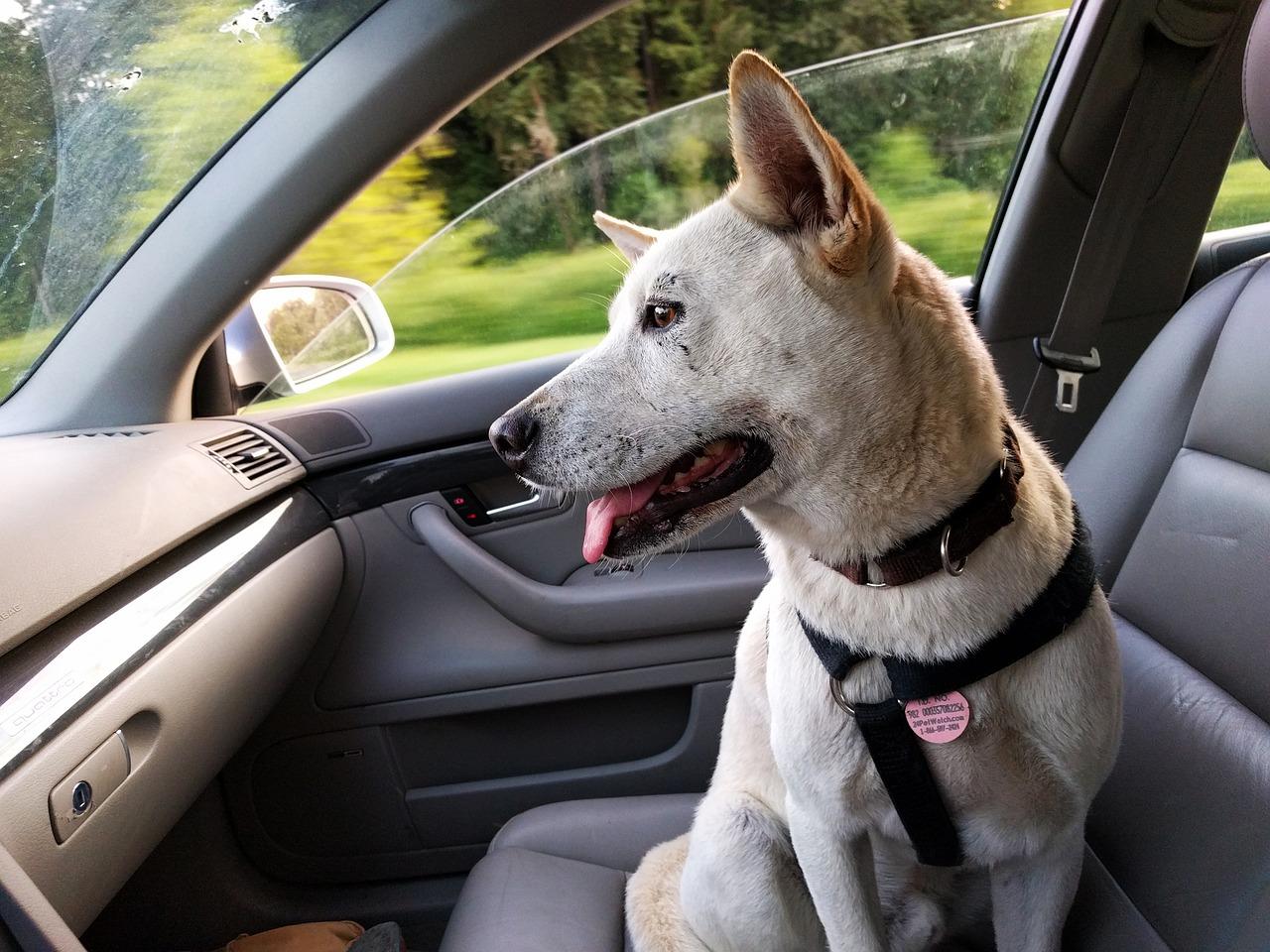 dog trip
