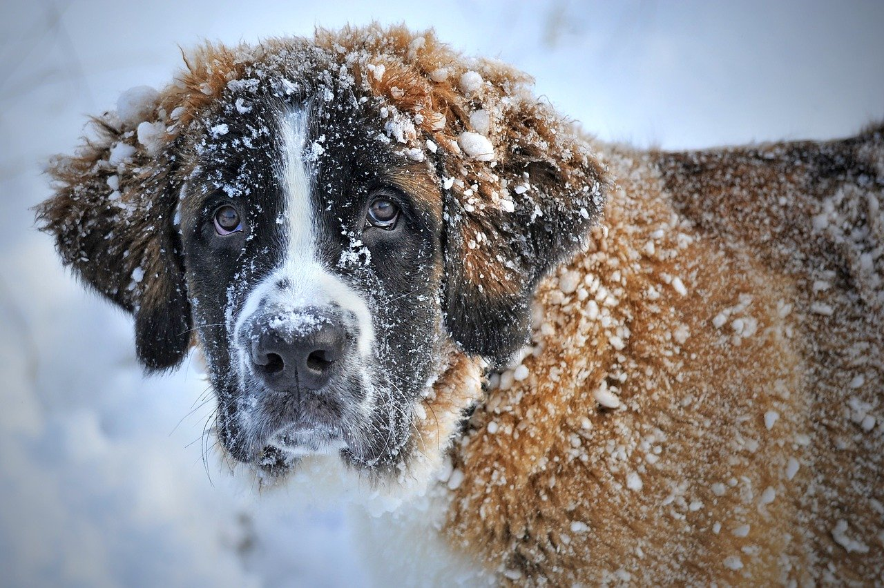 dog winter