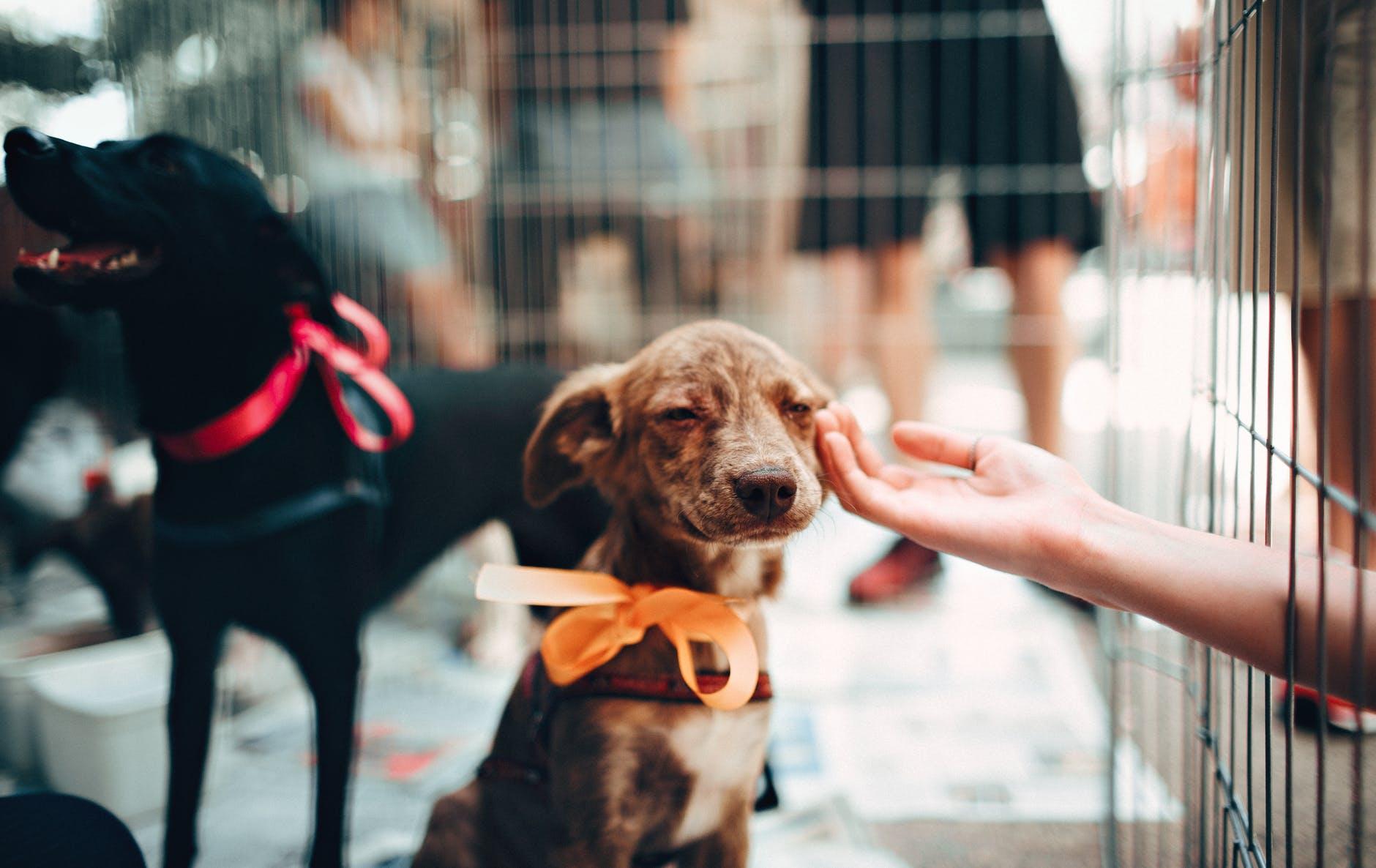 Doggie Day Care Checklist