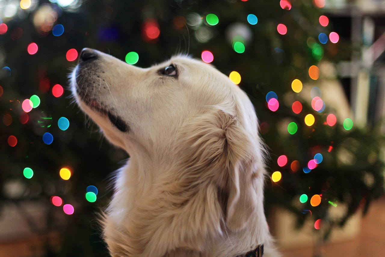 How Should You Care For Your Pet During the Holidays?