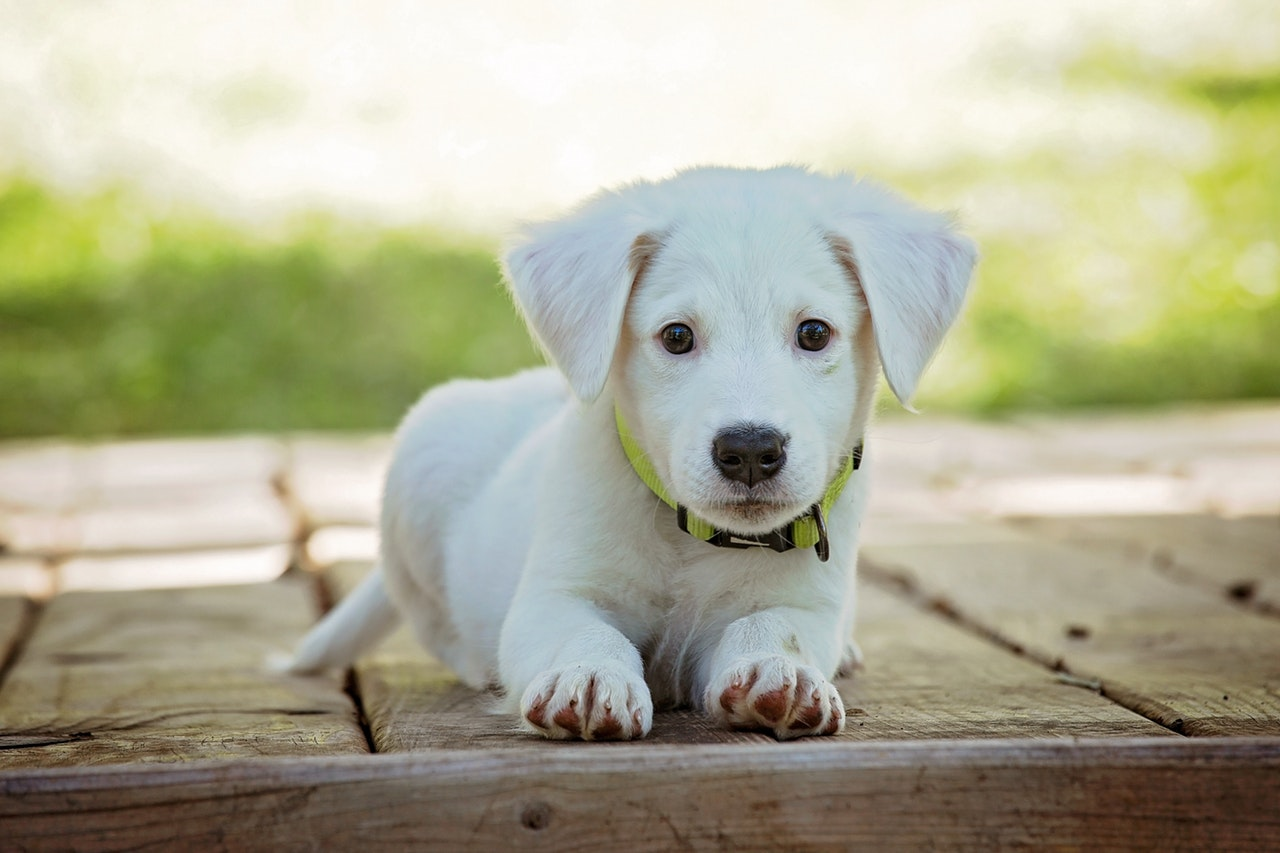 What Should I Do When I Bring Home A New Puppy In Edmond?